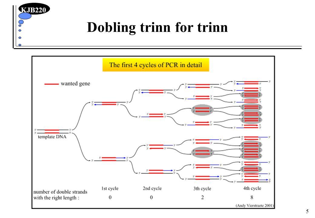 KJB220 16 Optimalisering av reaksjonsbetingelser Mg ++ konsentrasjon –DNA pol.