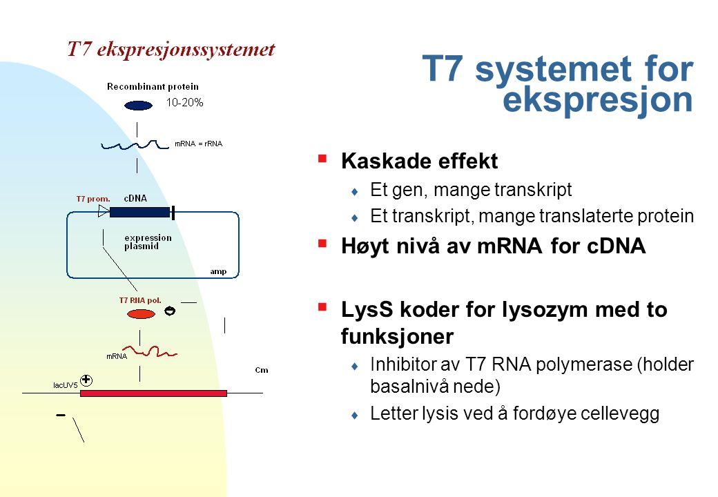 T7 systemet for ekspresjon  Kaskade effekt  Et gen, mange transkript  Et transkript, mange translaterte protein  Høyt nivå av mRNA for cDNA  LysS