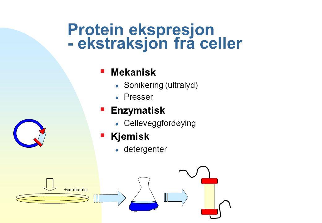 Protein ekspresjon - ekstraksjon fra celler +antibiotika  Mekanisk  Sonikering (ultralyd)  Presser  Enzymatisk  Celleveggfordøying  Kjemisk  de