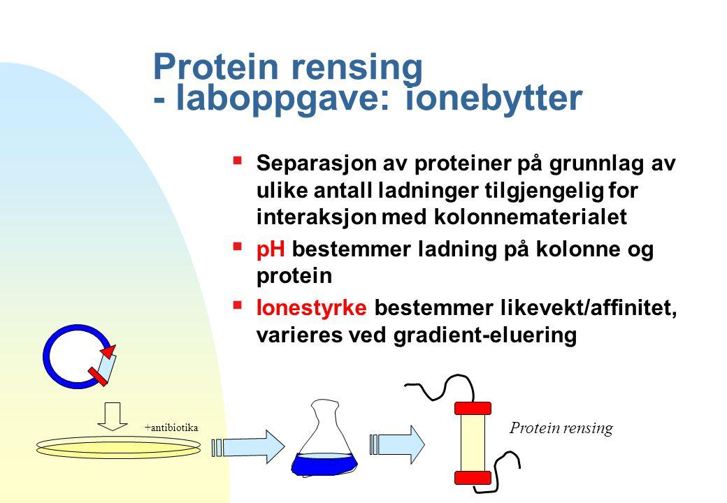 Protein rensing - laboppgave: ionebytter Protein rensing +antibiotika  Separasjon av proteiner på grunnlag av ulike antall ladninger tilgjengelig for