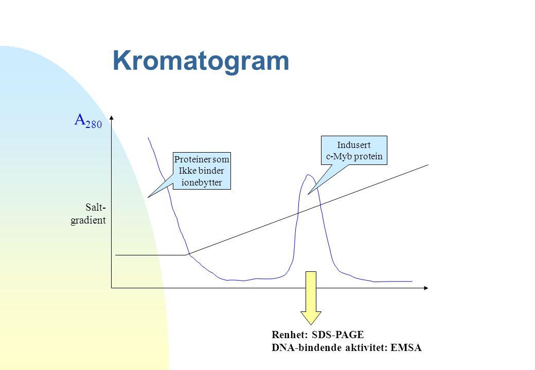 Kromatogram A 280 Salt- gradient Proteiner som Ikke binder ionebytter Indusert c-Myb protein Renhet: SDS-PAGE DNA-bindende aktivitet: EMSA