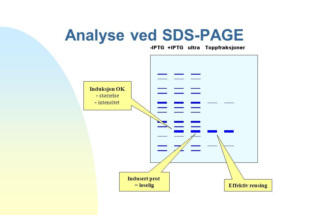 Analyse ved SDS-PAGE -IPTG +IPTG ultra Toppfraksjoner Induksjon OK - størrelse - intensitet Indusert prot = løselig Effektiv rensing