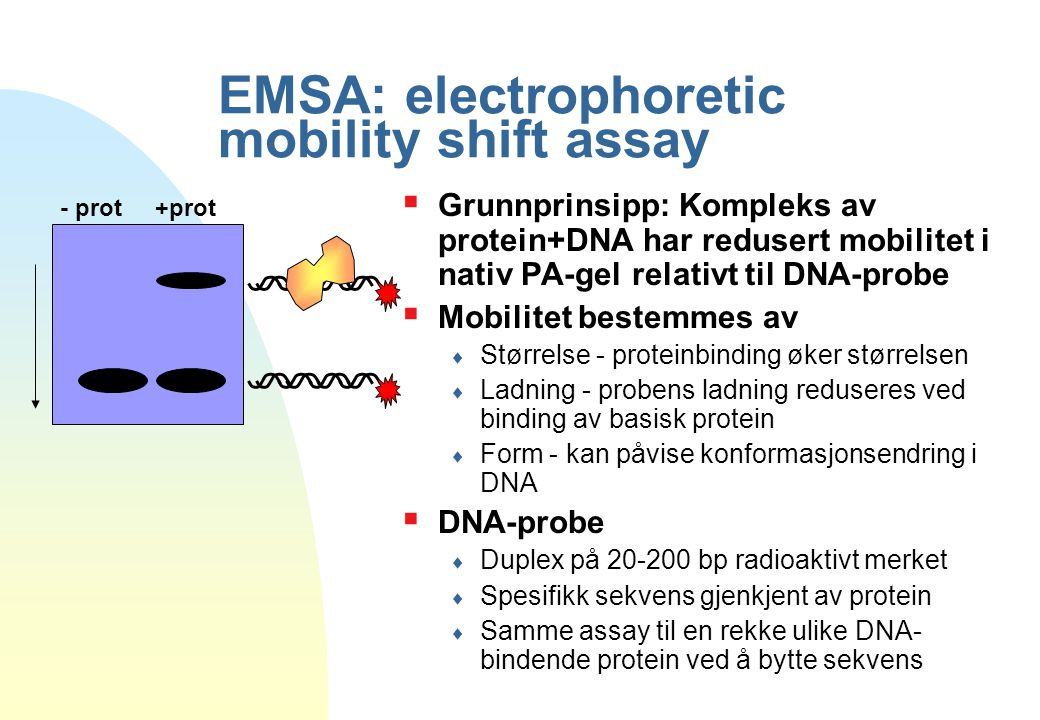 EMSA: electrophoretic mobility shift assay  Grunnprinsipp: Kompleks av protein+DNA har redusert mobilitet i nativ PA-gel relativt til DNA-probe  Mob