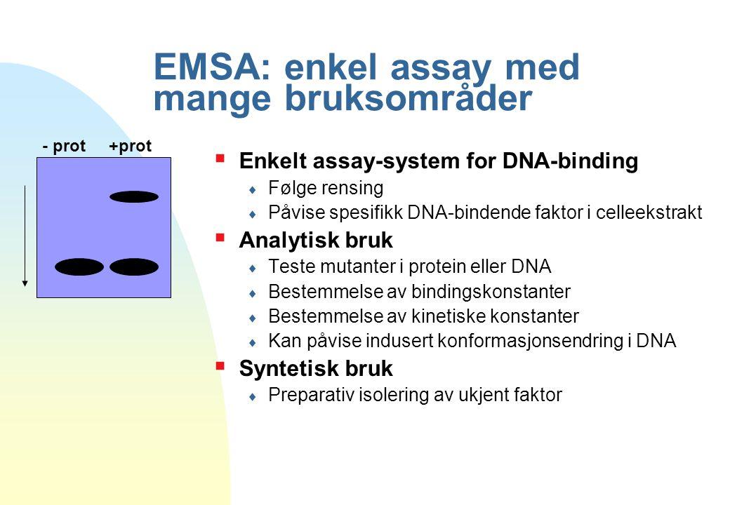 EMSA: enkel assay med mange bruksområder  Enkelt assay-system for DNA-binding  Følge rensing  Påvise spesifikk DNA-bindende faktor i celleekstrakt