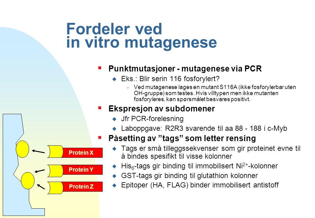 Fordeler ved in vitro mutagenese  Punktmutasjoner - mutagenese via PCR  Eks.: Blir serin 116 fosforylert? F Ved mutagenese lages en mutant S116A (ik