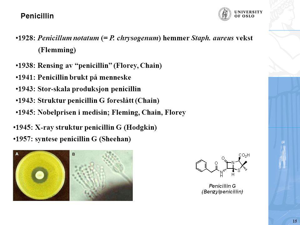 """1928: Penicillum notatum (= P. chrysogenum) hemmer Staph. aureus vekst (Flemming) 1938: Rensing av """"penicillin"""" (Florey, Chain) 1941: Penicillin brukt"""
