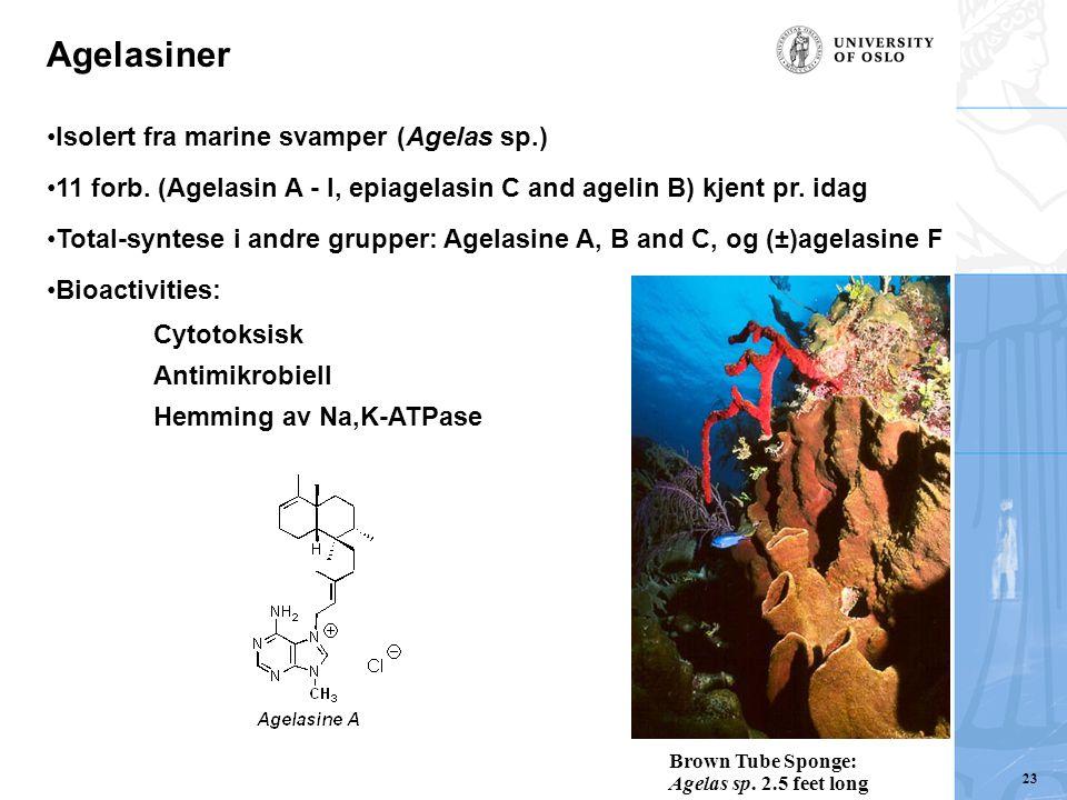 Agelasiner Isolert fra marine svamper (Agelas sp.) 11 forb. (Agelasin A - I, epiagelasin C and agelin B) kjent pr. idag Total-syntese i andre grupper: