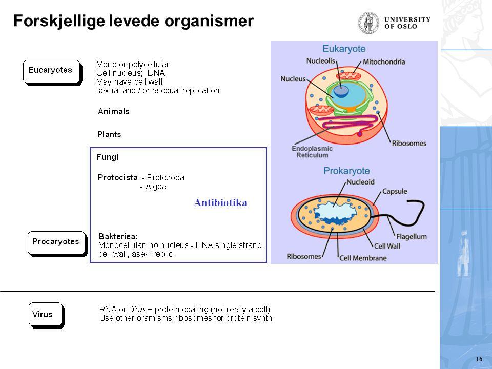 Forskjellige levede organismer Antibiotika 16