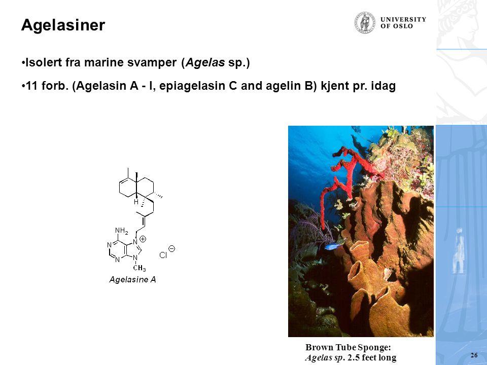 Agelasiner Isolert fra marine svamper (Agelas sp.) 11 forb. (Agelasin A - I, epiagelasin C and agelin B) kjent pr. idag Brown Tube Sponge: Agelas sp.
