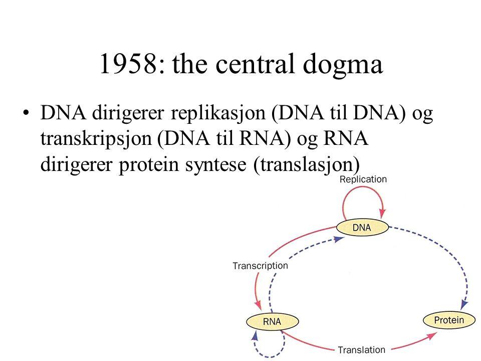 1958: the central dogma DNA dirigerer replikasjon (DNA til DNA) og transkripsjon (DNA til RNA) og RNA dirigerer protein syntese (translasjon)