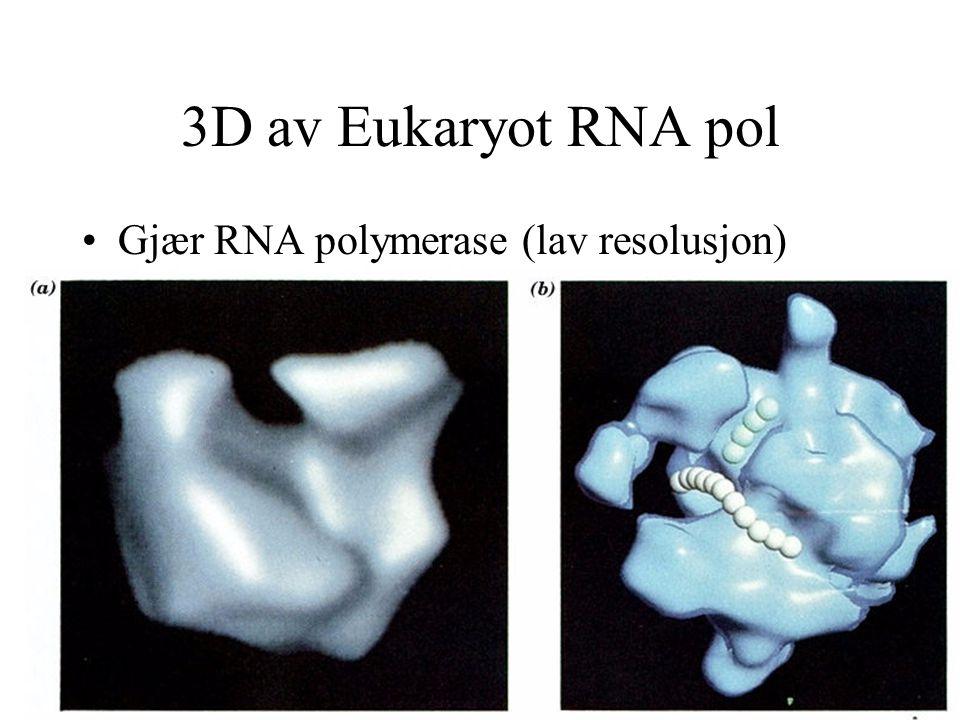 3D av Eukaryot RNA pol Gjær RNA polymerase (lav resolusjon)