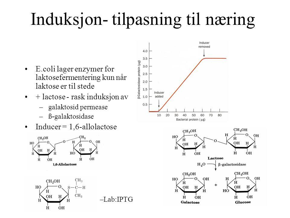 Induksjon- tilpasning til næring E.coli lager enzymer for laktosefermentering kun når laktose er til stede + lactose - rask induksjon av –galaktosid p