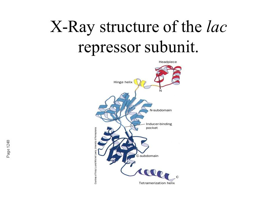 X-Ray structure of the lac repressor subunit. Page 1248