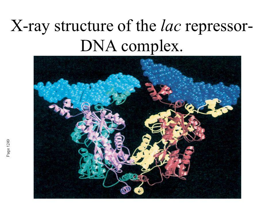 X-ray structure of the lac repressor- DNA complex. Page 1249