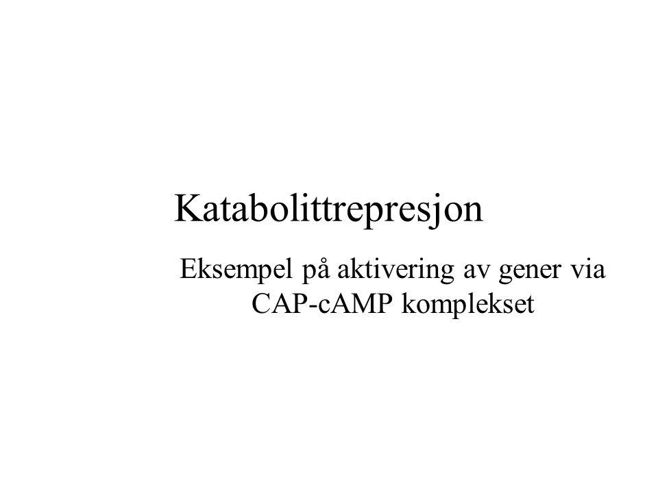 Katabolittrepresjon Eksempel på aktivering av gener via CAP-cAMP komplekset
