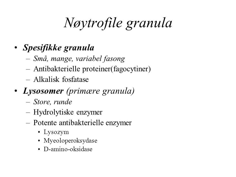 Nøytrofile granula Spesifikke granula –Små, mange, variabel fasong –Antibakterielle proteiner(fagocytiner) –Alkalisk fosfatase Lysosomer (primære gran