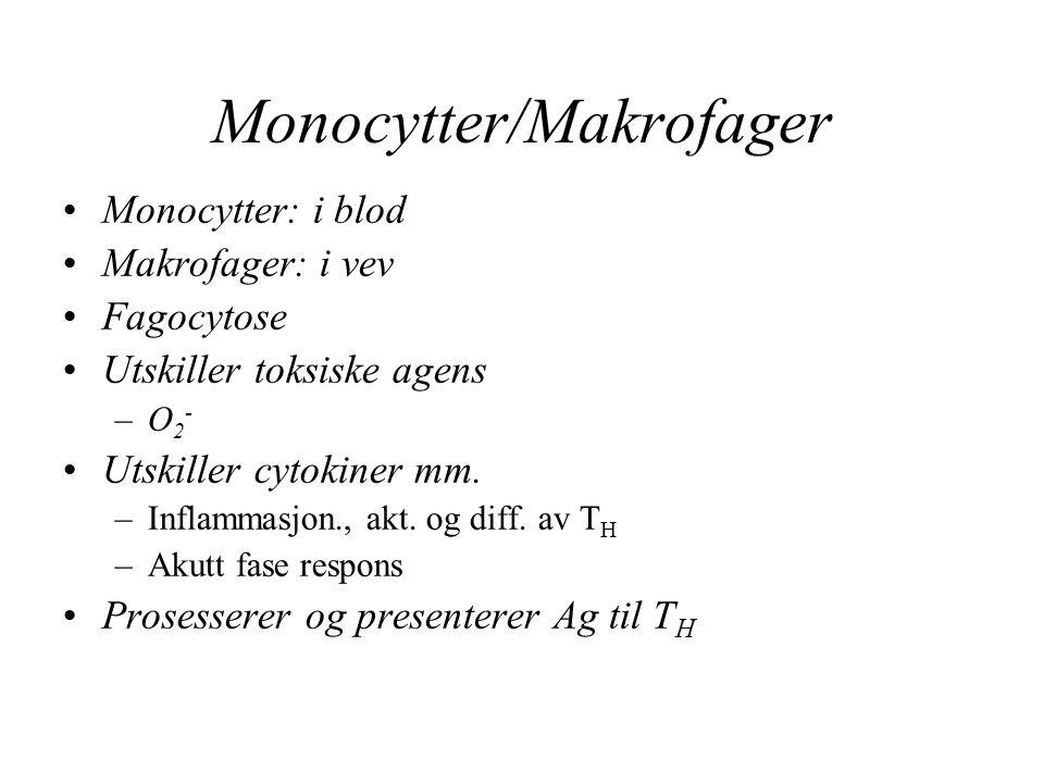 Monocytter/Makrofager Monocytter: i blod Makrofager: i vev Fagocytose Utskiller toksiske agens –O 2 - Utskiller cytokiner mm. –Inflammasjon., akt. og
