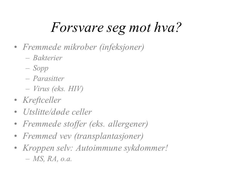 Forsvare seg mot hva? Fremmede mikrober (infeksjoner) –Bakterier –Sopp –Parasitter –Virus (eks. HIV) Kreftceller Utslitte/døde celler Fremmede stoffer