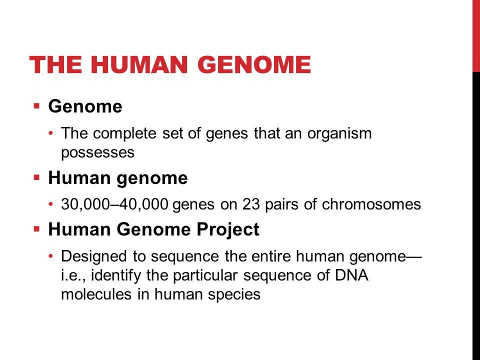 THE HUMAN GENOME  Genome The complete set of genes that an organism possesses  Human genome 30,000–40,000 genes on 23 pairs of chromosomes  Human G