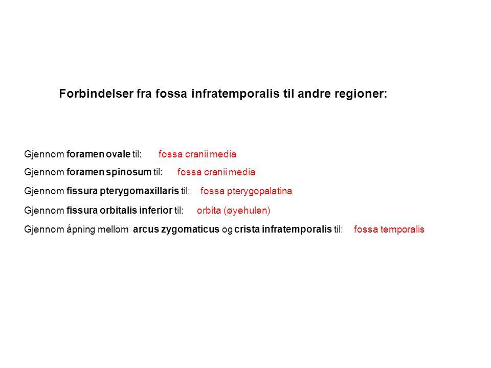 Forbindelser fra fossa infratemporalis til andre regioner: Gjennom foramen ovale til: Gjennom foramen spinosum til: Gjennom fissura pterygomaxillaris