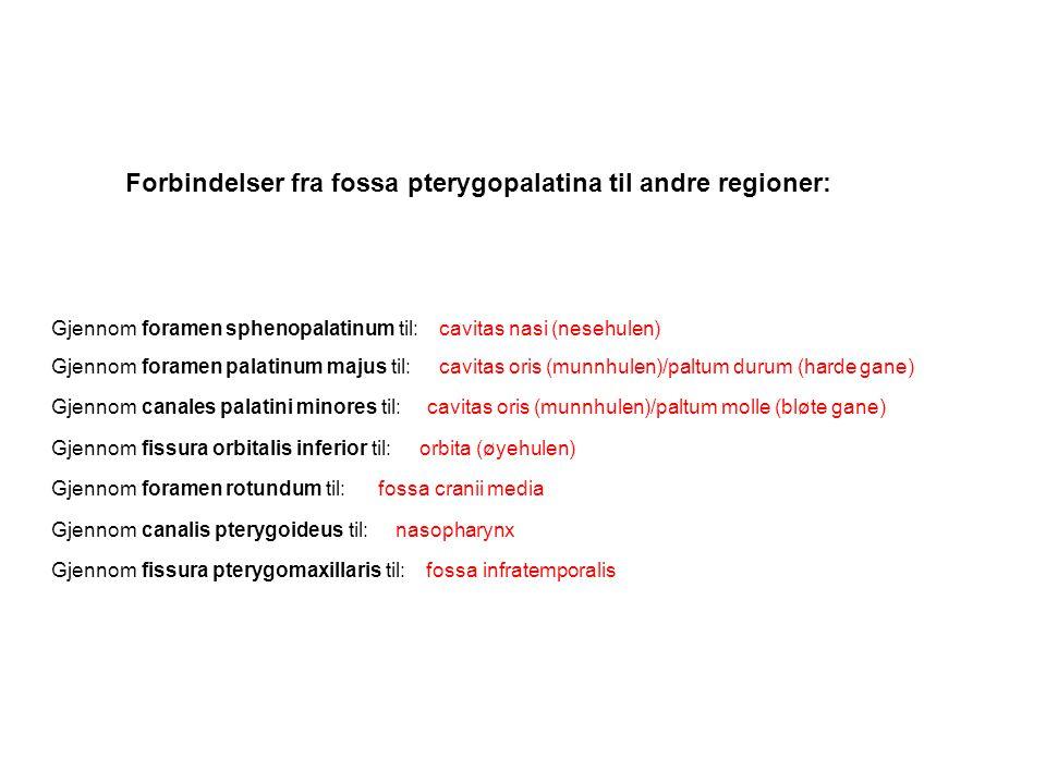 Forbindelser fra fossa pterygopalatina til andre regioner: Gjennom foramen sphenopalatinum til: Gjennom foramen palatinum majus til: Gjennom canales p