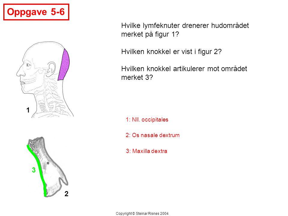 Oppgave 5-6 3 Hvilke lymfeknuter drenerer hudområdet merket på figur 1? Hvilken knokkel er vist i figur 2? Hvilken knokkel artikulerer mot området mer