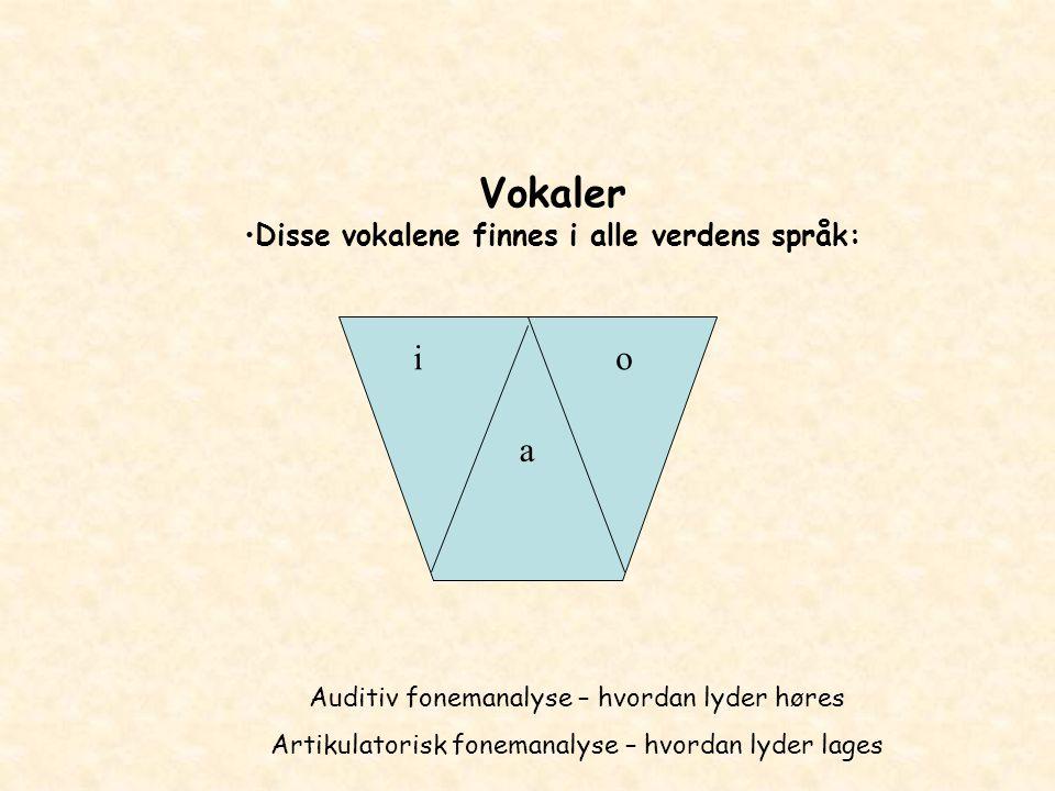 Vokaler Disse vokalene finnes i alle verdens språk: a io Auditiv fonemanalyse – hvordan lyder høres Artikulatorisk fonemanalyse – hvordan lyder lages