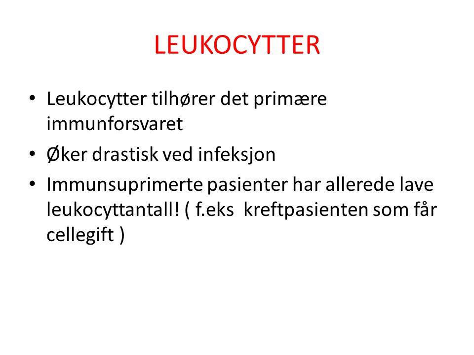LEUKOCYTTER Leukocytter tilhører det primære immunforsvaret Øker drastisk ved infeksjon Immunsuprimerte pasienter har allerede lave leukocyttantall! (
