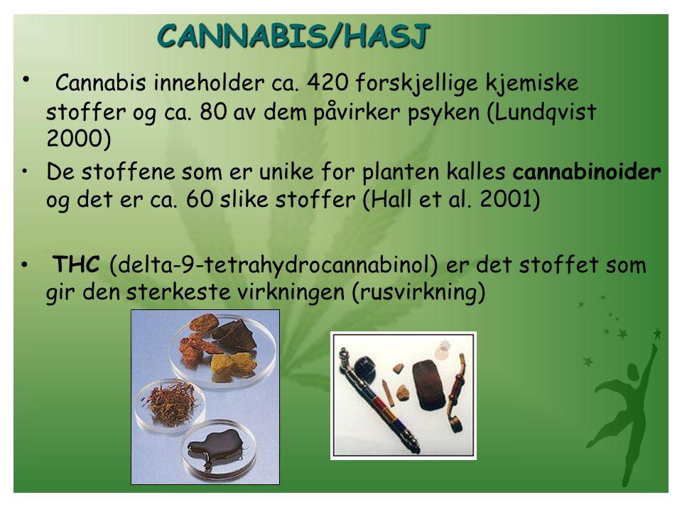 CANNABIS/HASJ Cannabis inneholder ca.420 forskjellige kjemiske stoffer og ca.