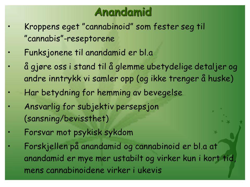 Anandamid Kroppens eget cannabinoid som fester seg til cannabis -reseptorene Funksjonene til anandamid er bl.a å gjøre oss i stand til å glemme ubetydelige detaljer og andre inntrykk vi samler opp (og ikke trenger å huske) Har betydning for hemming av bevegelse Ansvarlig for subjektiv persepsjon (sansning/bevissthet) Forsvar mot psykisk sykdom Forskjellen på anandamid og cannabinoid er bl.a at anandamid er mye mer ustabilt og virker kun i kort tid, mens cannabinoidene virker i ukevis