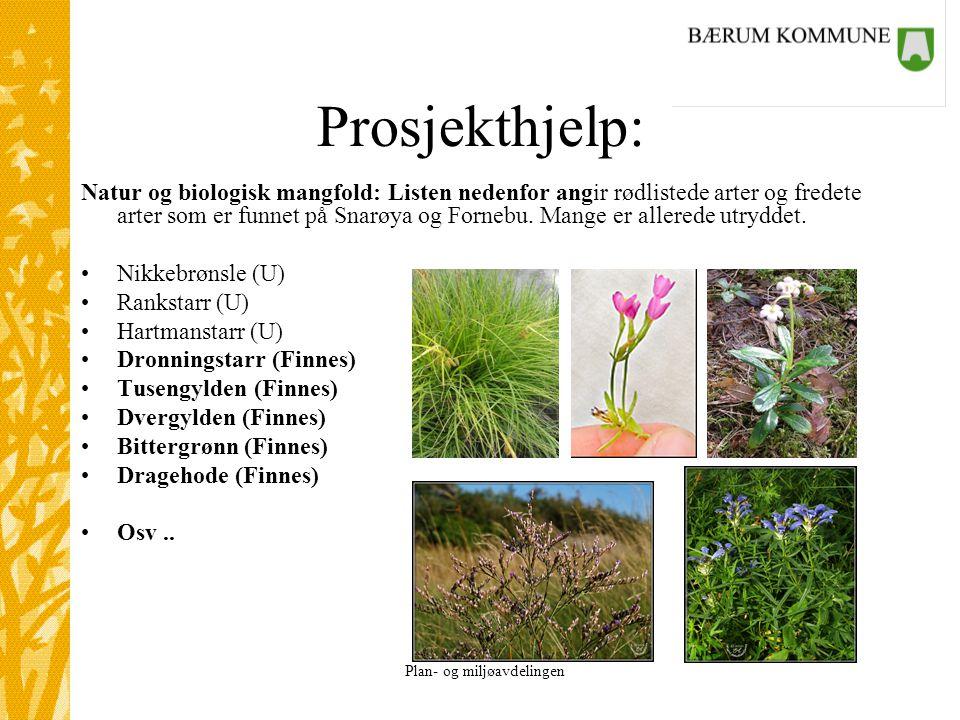 Plan- og miljøavdelingen Prosjekthjelp: Natur og biologisk mangfold: Listen nedenfor angir rødlistede arter og fredete arter som er funnet på Snarøya