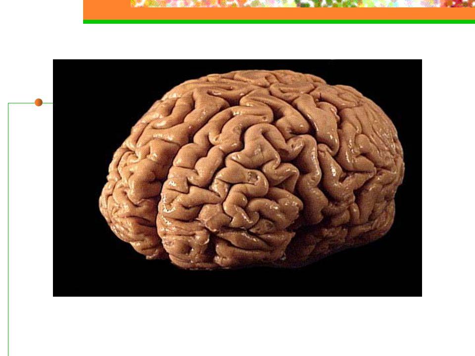 Varierende debutsymptomer Hodepine, kvalme og svimmelhet Førstegangs epileptisk anfall Diplopi Slagsystomer: hemiparese, nummenhet Hormonrelaterte symptomer Tinnitus, hørselsereduksjon Kognitiv endring