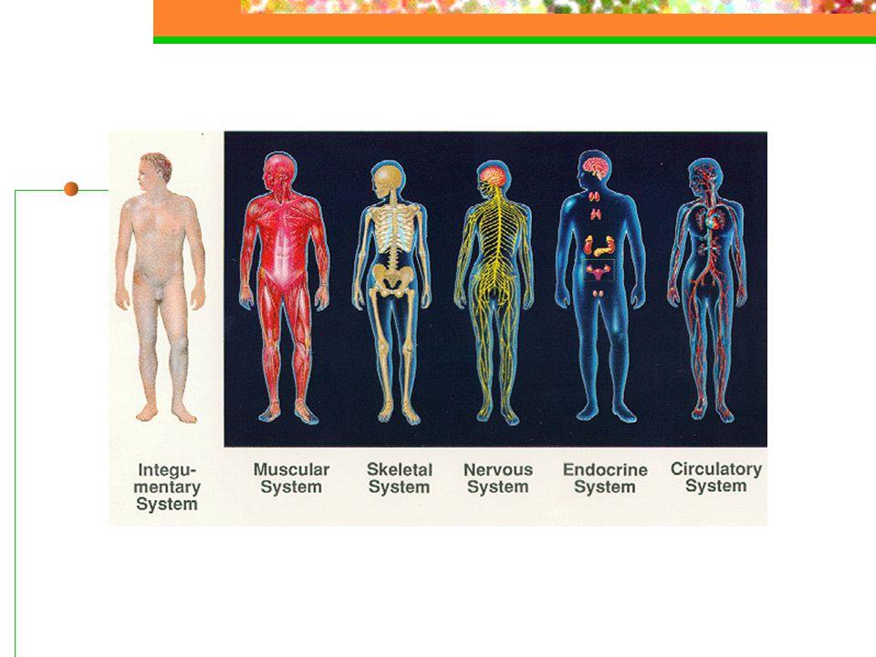 Behandling Avlastende nevrokirurgi Strålebehandling Forebyggende cytostatika og strålebehandling ved kjente skjelletmetastaser