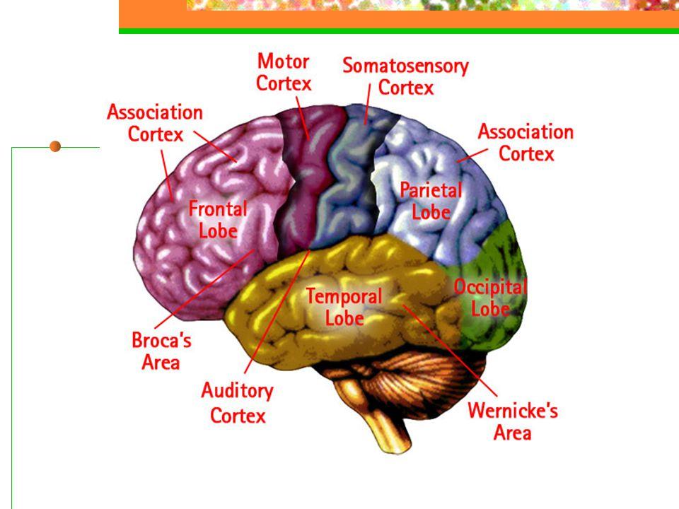 Blødning med gjennombrudd til ventrikkelsystemet
