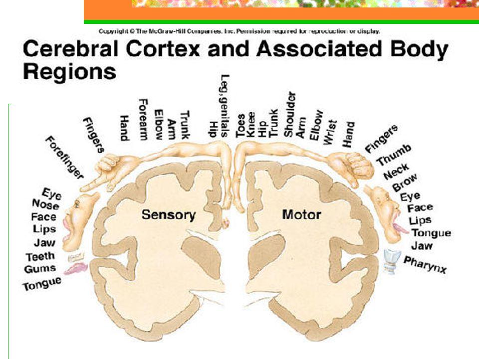 Kronisk sykdom Funksjonsforstyrrelse – atakk og restitusjon, men etter hvert ofte varig svikt – sekundær progressiv Lammelser og parestesier – sensorisk ubehag Blæreforstyrrelse – RIK Kognitiv affeksjon