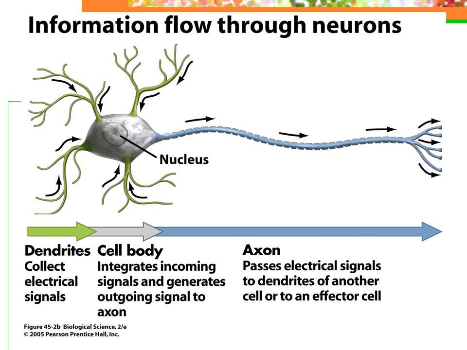 Cerebrovaskulære sykdommer Hjerneinfarkt – akutt tilstoppet blodkar som hindrer blodtilførselen – celler dør Småkarsykdom – generelt trange småkar Hjerneblødning – blodkar sprekker – blod ut i hjernevevet SAH – subaraknoidal blødning – som regel fra aneurysme - utposning