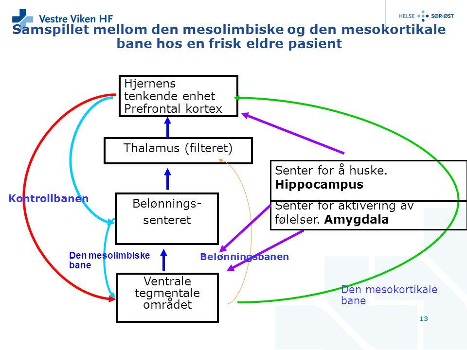 13 Samspillet mellom den mesolimbiske og den mesokortikale bane hos en frisk eldre pasient Hjernens tenkende enhet Prefrontal kortex Thalamus (filtere