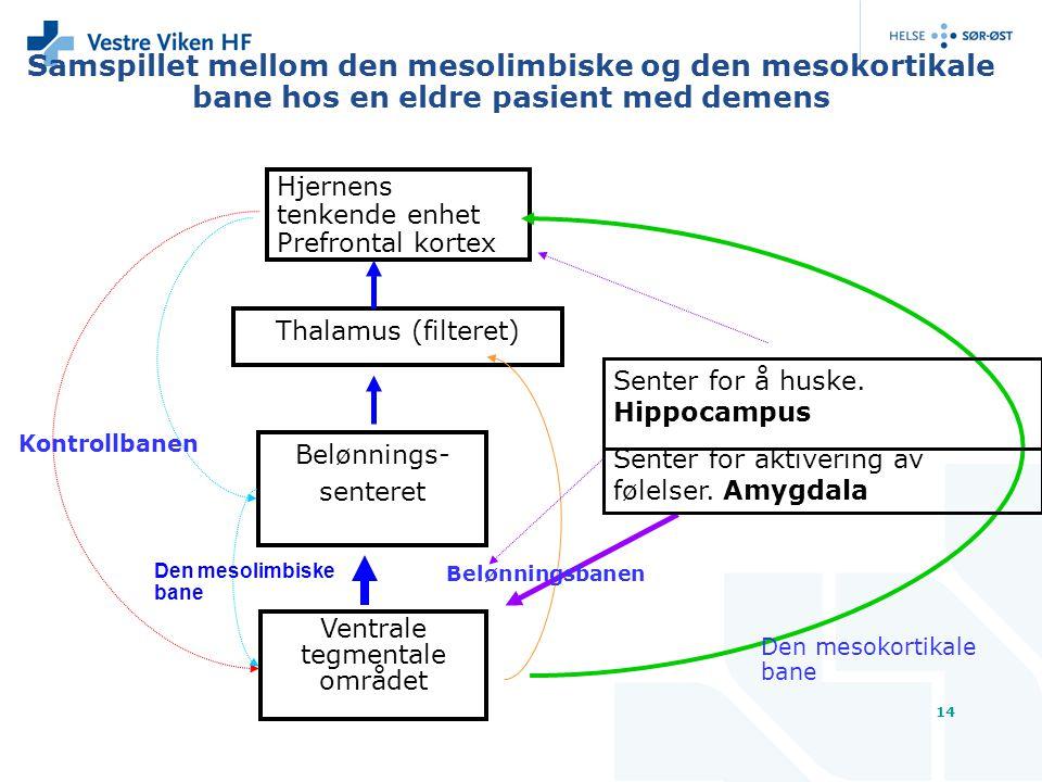 14 Samspillet mellom den mesolimbiske og den mesokortikale bane hos en eldre pasient med demens Hjernens tenkende enhet Prefrontal kortex Thalamus (fi