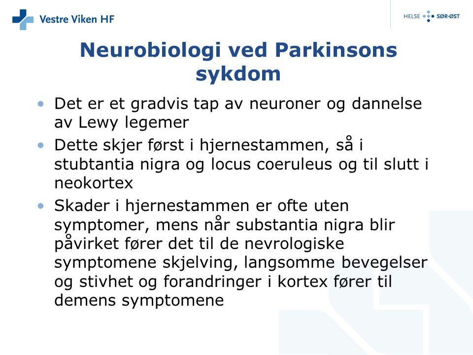 Neurobiologi ved Parkinsons sykdom Det er et gradvis tap av neuroner og dannelse av Lewy legemer Dette skjer først i hjernestammen, så i stubtantia nigra og locus coeruleus og til slutt i neokortex Skader i hjernestammen er ofte uten symptomer, mens når substantia nigra blir påvirket fører det til de nevrologiske symptomene skjelving, langsomme bevegelser og stivhet og forandringer i kortex fører til demens symptomene