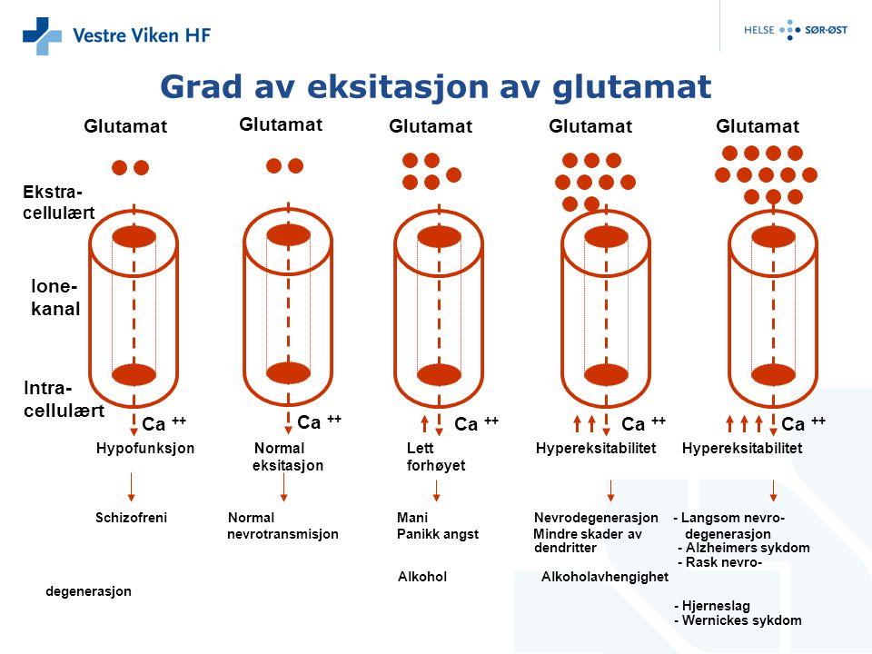 Grad av eksitasjon av glutamat Glutamat Ca ++ Ekstra- cellulært Ione- kanal Schizofreni Normal Mani Nevrodegenerasjon - Langsom nevro- nevrotransmisjon Panikk angst Mindre skader av degenerasjon dendritter - Alzheimers sykdom - Rask nevro- Alkohol Alkoholavhengighet degenerasjon - Hjerneslag - Wernickes sykdom Intra- cellulært Hypofunksjon Normal Lett Hypereksitabilitet Hypereksitabilitet eksitasjon forhøyet Glutamat Ca ++ Glutamat Ca ++ Glutamat Ca ++ Glutamat Ca ++