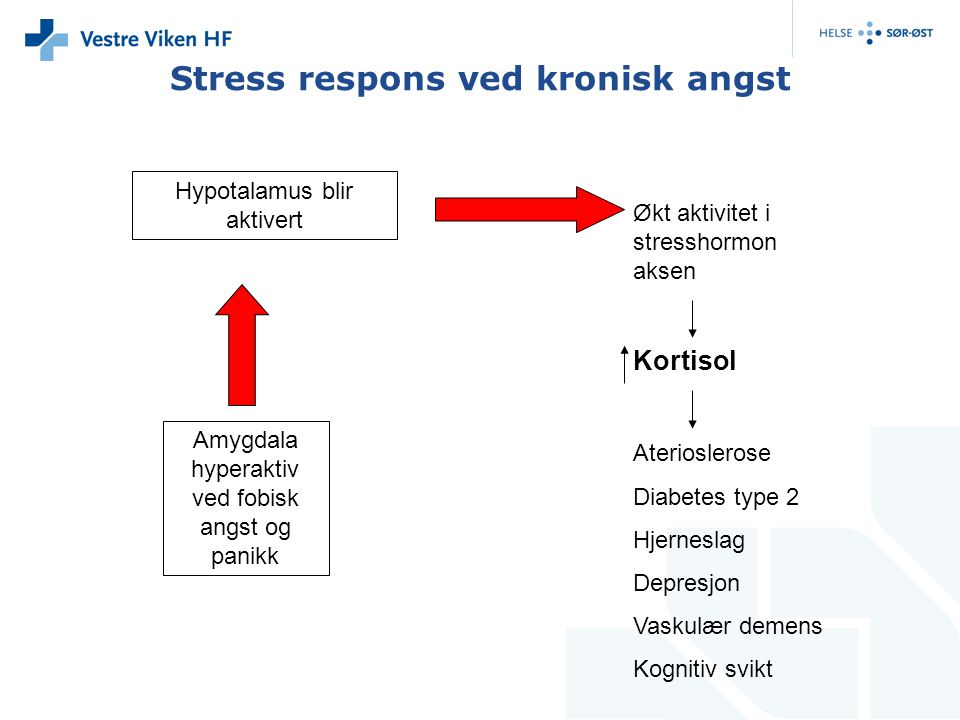 Stress respons ved kronisk angst Hypotalamus blir aktivert Amygdala hyperaktiv ved fobisk angst og panikk Økt aktivitet i stresshormon aksen Kortisol Aterioslerose Diabetes type 2 Hjerneslag Depresjon Vaskulær demens Kognitiv svikt