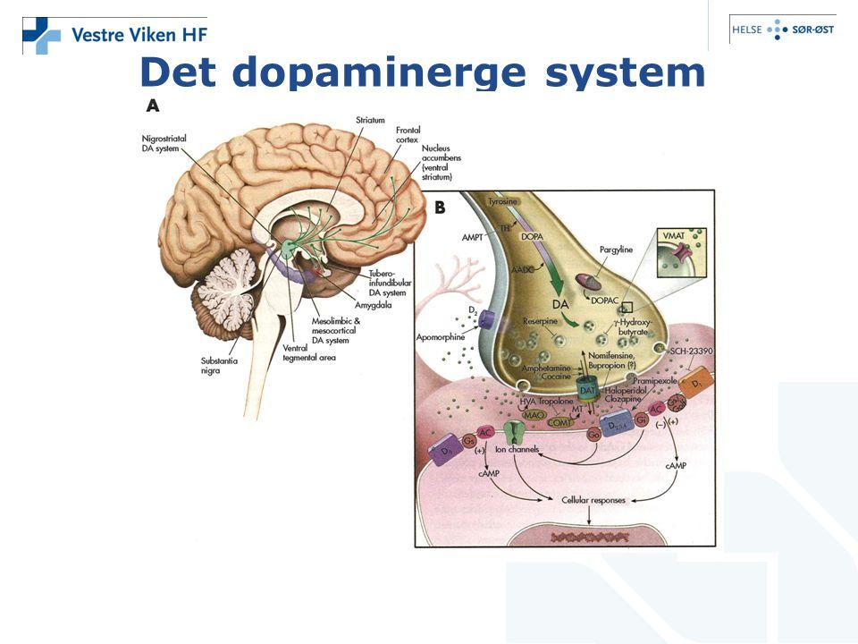 Det dopaminerge system