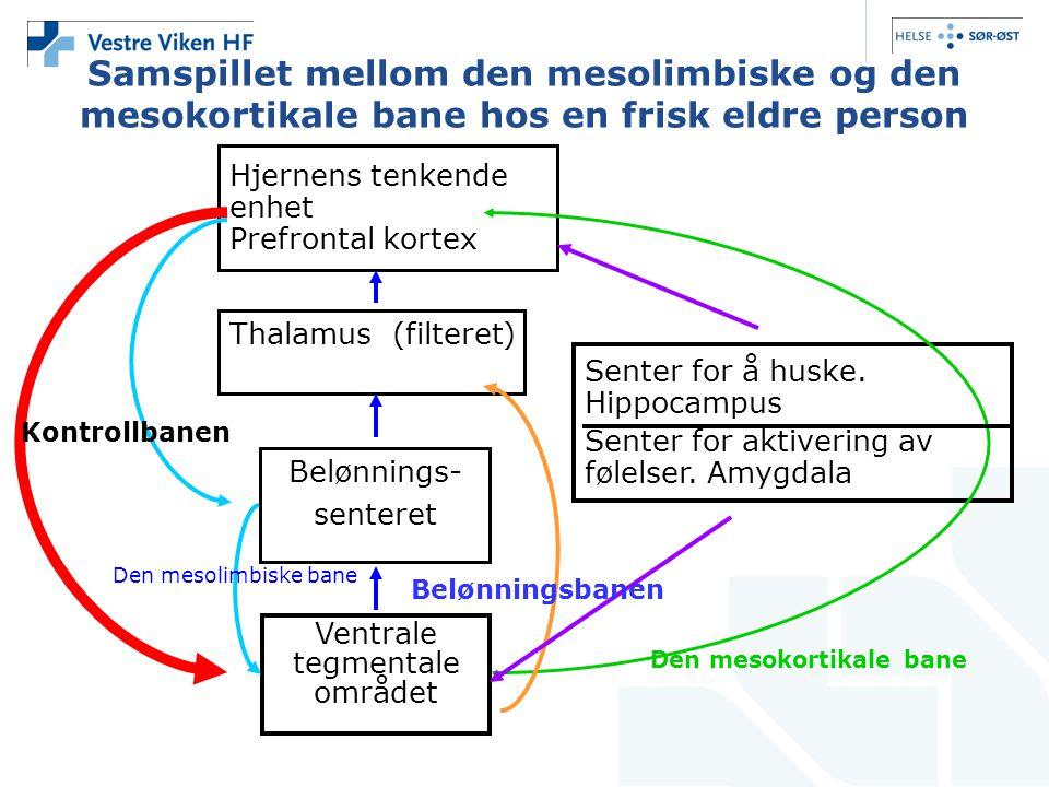 Samspillet mellom den mesolimbiske og den mesokortikale bane hos en frisk eldre person Hjernens tenkende enhet Prefrontal kortex Thalamus (filteret) Belønnings- senteret Ventrale tegmentale området Senter for å huske.