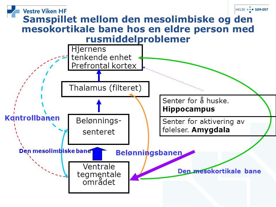 Samspillet mellom den mesolimbiske og den mesokortikale bane hos en eldre person med rusmiddelproblemer Hjernens tenkende enhet Prefrontal kortex Thal