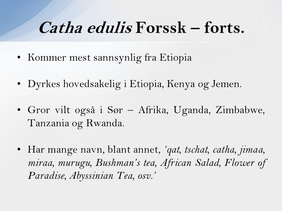 Kommer mest sannsynlig fra Etiopia Dyrkes hovedsakelig i Etiopia, Kenya og Jemen. Gror vilt også i Sør – Afrika, Uganda, Zimbabwe, Tanzania og Rwanda.