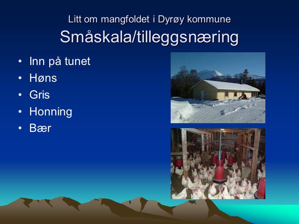Litt om mangfoldet i Dyrøy kommune Småskala/tilleggsnæring Inn på tunet Høns Gris Honning Bær