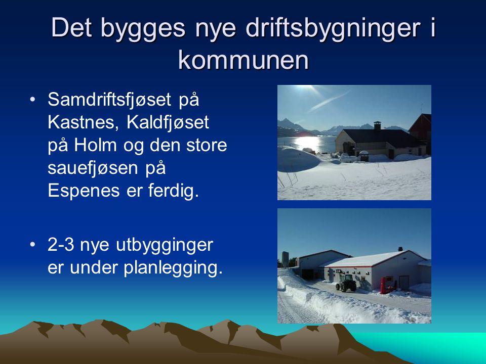 Det bygges nye driftsbygninger i kommunen Samdriftsfjøset på Kastnes, Kaldfjøset på Holm og den store sauefjøsen på Espenes er ferdig. 2-3 nye utbyggi
