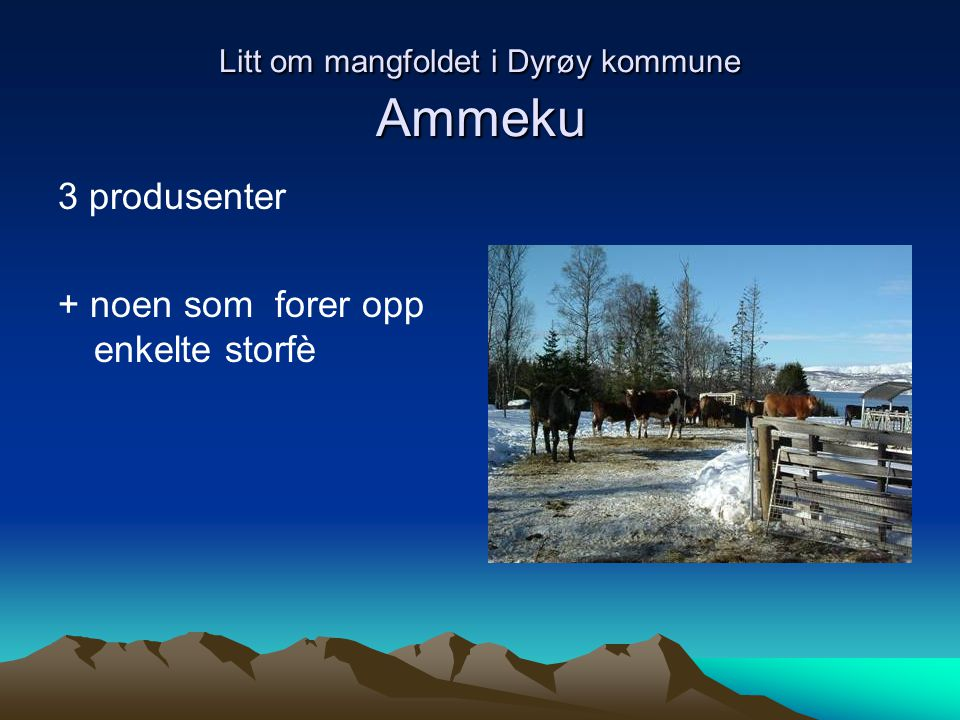 Litt om mangfoldet i Dyrøy kommune Ammeku 3 produsenter + noen som forer opp enkelte storfè