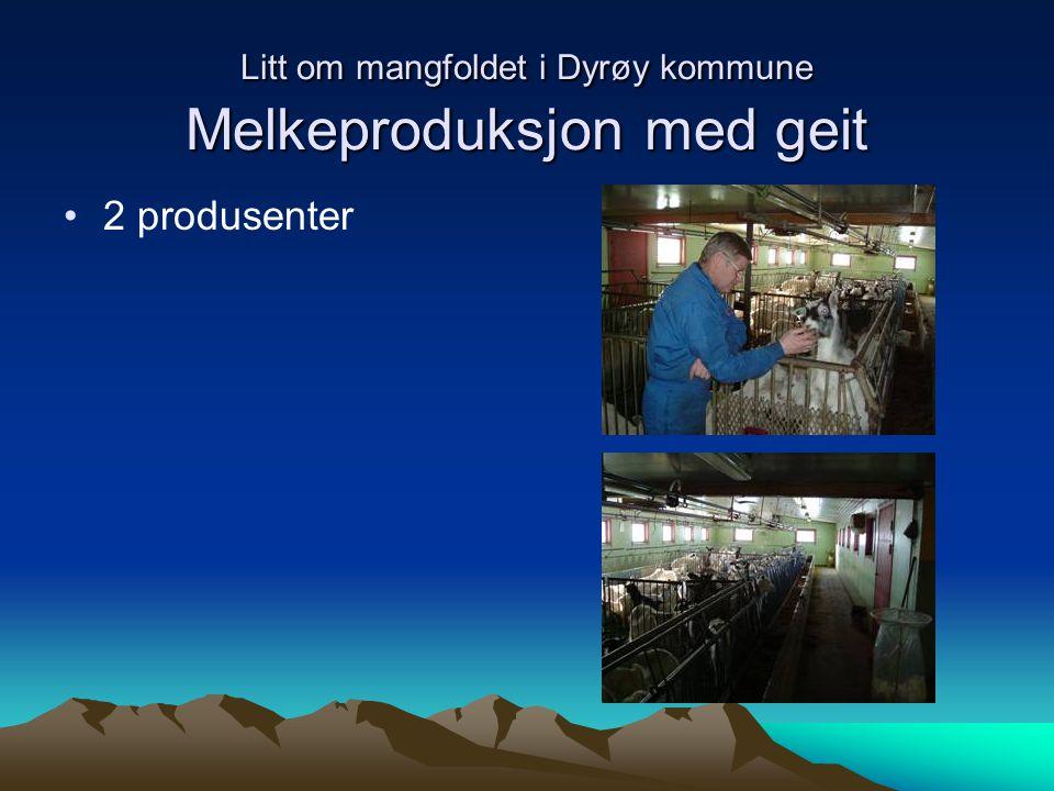 Litt om mangfoldet i Dyrøy kommune Sau 14 produsenter