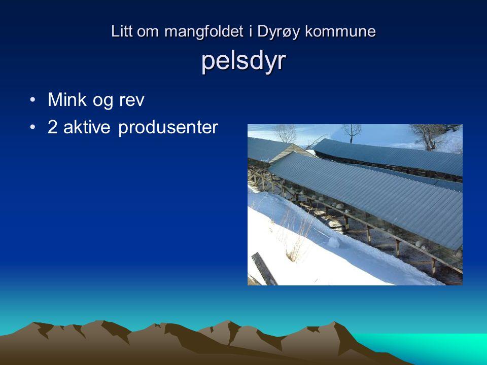 Litt om mangfoldet i Dyrøy kommune pelsdyr Mink og rev 2 aktive produsenter